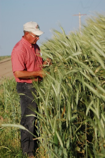 ehmke seed selling wheat triticale rye seed to farmers and